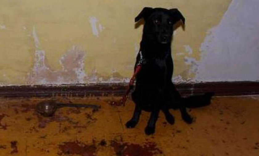 W mieszkaniu zatrzymanego złodzieja policjanci znaleźli zmaltretowanego psa