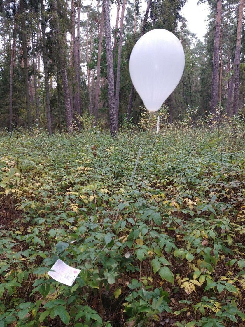 Niezwykłe znalezisko w ełckim lesie. Przebyło ponad tysiąc kilometrów!