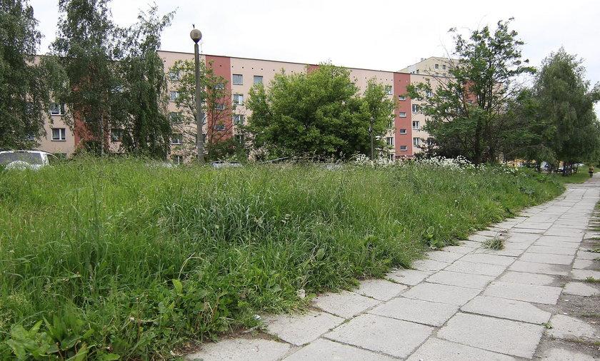 Trawa w Krakowie