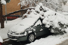 auto beograd, drvo