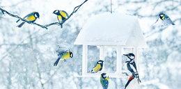 Co trzeba wiedzieć o dokarmianiu ptaków zimą
