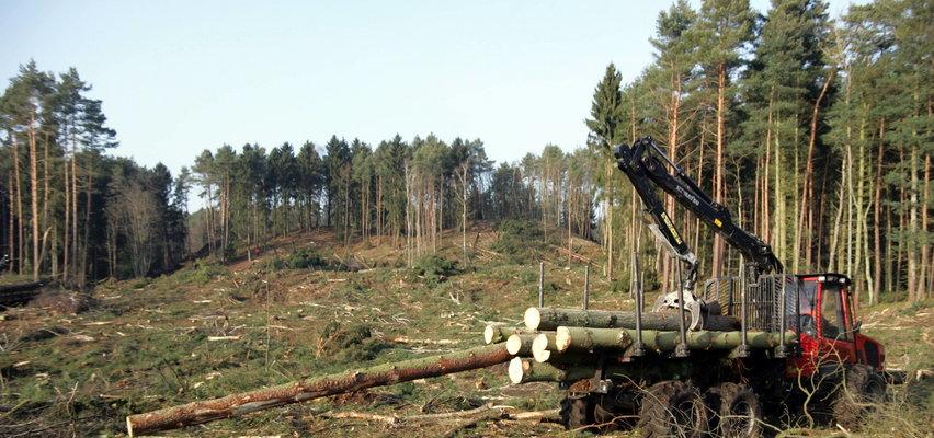 Zaczęło się od gigantycznej wycinki drzew. Tak wygląda budowa przekopu na Mierzei Wiślanej. GALERIA
