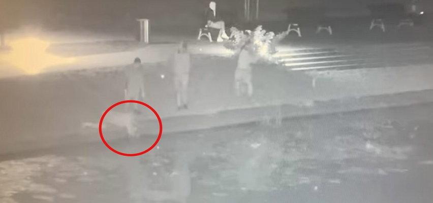 Kot wpadł do rzeki w Nowym Dworze Gdańskim. Bohaterska postawa świadków