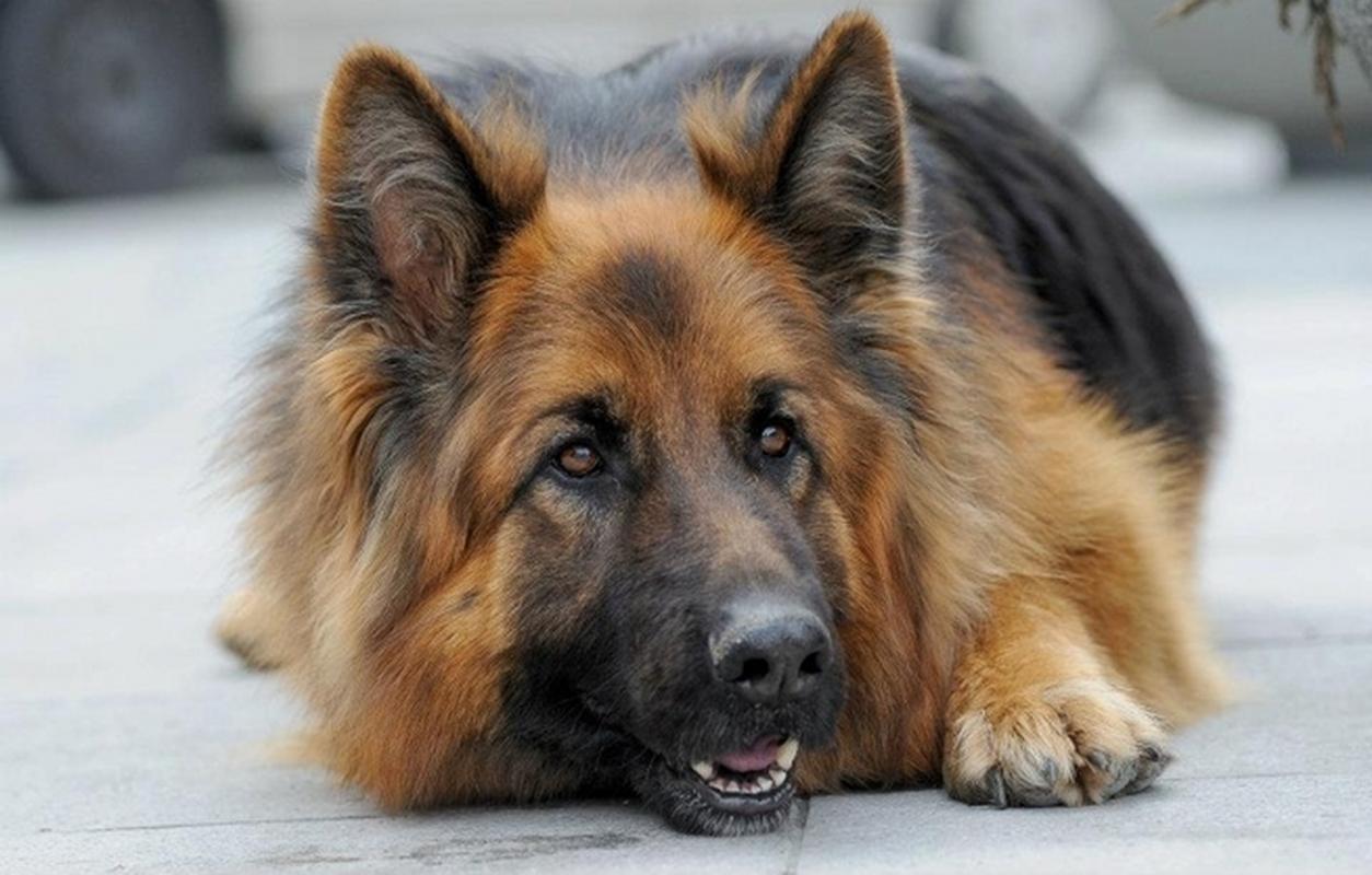 Pies Alex pomaga w łapaniu przestępców