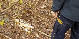 Makabryczne odkrycie. Szukali śmieci, znaleźli kości!