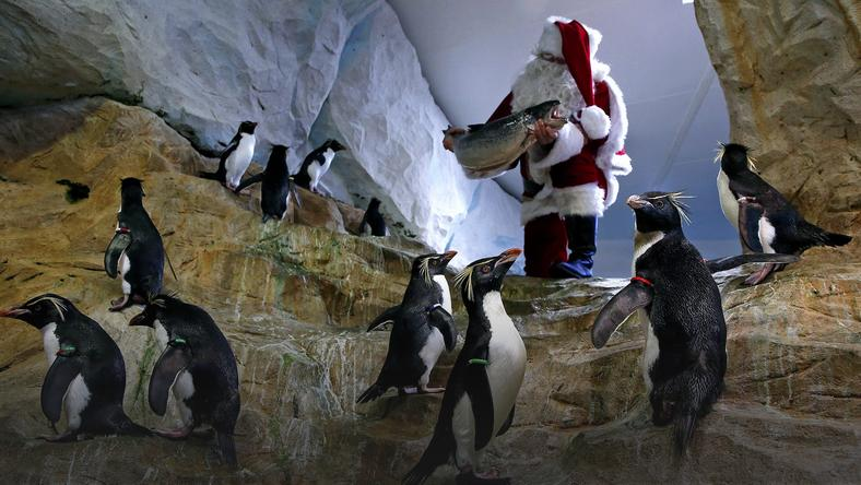 epaselect FRANCE ANIMALS CHRISTMAS (Santa Claus visits animal exhibition park Marineland in Antibes)