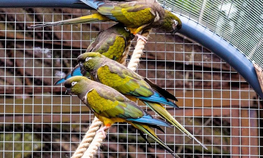Nowa woliera dla papug w łódzkim zoo