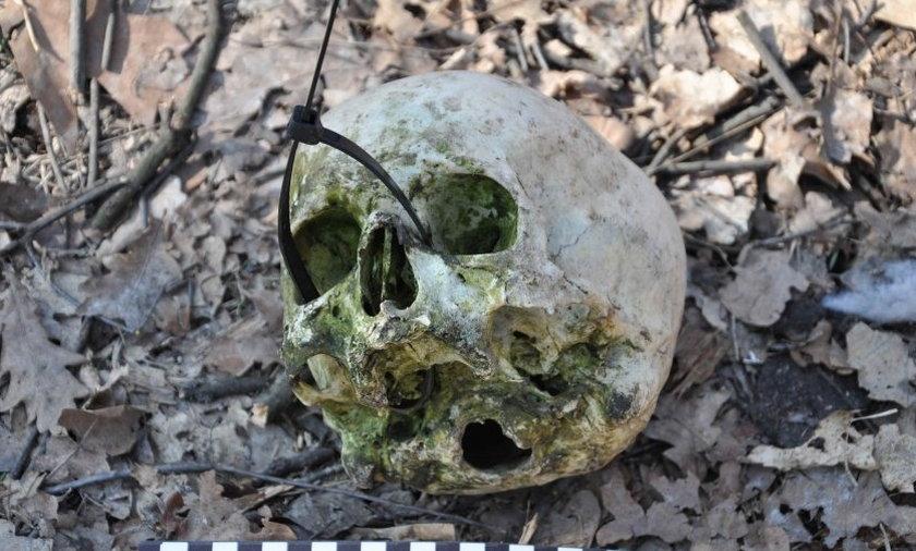 Wieszowa znaleziono ludzką czaszkę w lesie