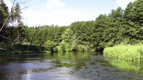 Wda w okolicy Tlenia niedostępna dla kajakarzy
