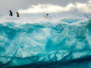 Penguins on the iceberg