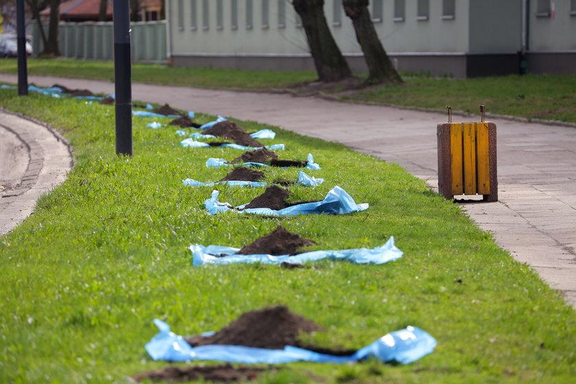 sadzenie drzew przy Zielonej w Łodzi
