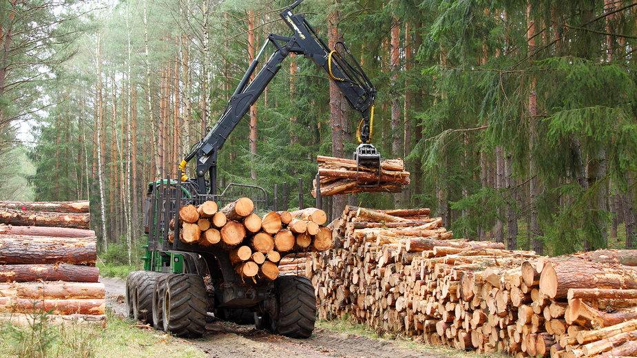 Fabryka Izery powstanie na miejscu wyciętego lasu