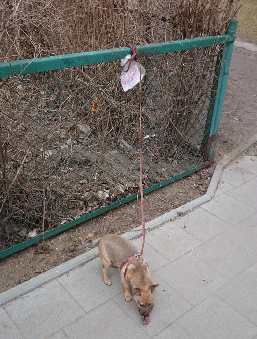 Psiak był przywiązany do ogrodzenia na gdańskiej Zaspie