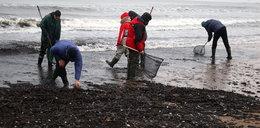 Bałtyk po sztormie wyrzucił skarby. Ludzie masowo przeczesują plaże!