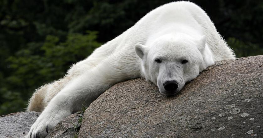 """Według wyliczeń tylko 1 z 6 """"rynków niedźwiedzia"""" zaczął się w okresie wakacyjnym na polskiej giełdzie"""