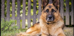 W Wołominie pies dokonał makabrycznego odkrycia