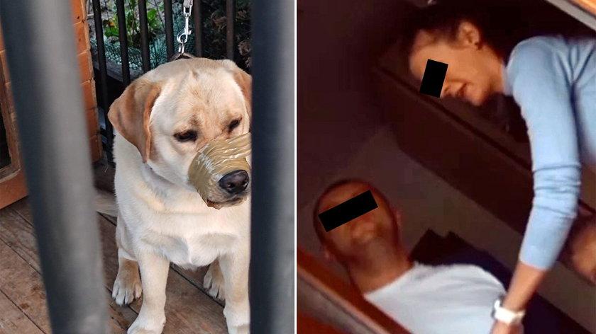Koszmar psa.