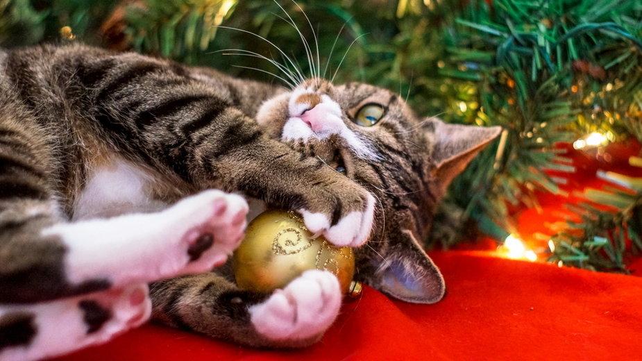 Dlaczego kot tak uparcie zrzuca bombki z choinki?