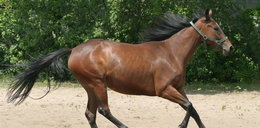 Mężczyzna we fraku zgwałcił mojego konia. Od 18 lat!