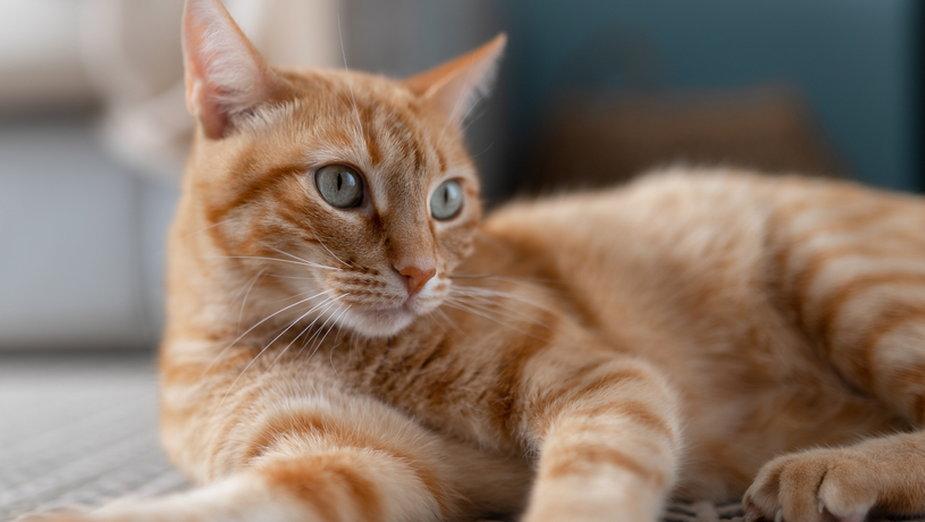 Pięć faktów o rudych kotach, które prawdopodobnie was zaskoczą