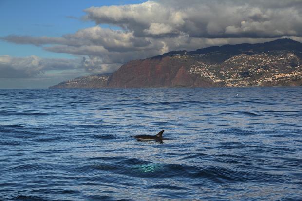 Morskie ssaki na Maderze