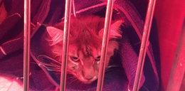 Ten kot znalazł kiepską kryjówkę do spania. Wyprał się w 60 stopniach