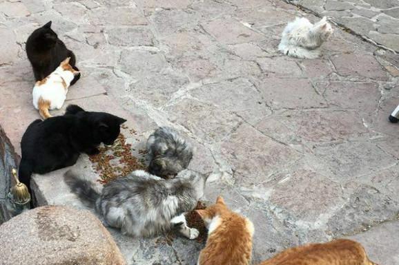 Meštani su primetili mačora kog su napadale lokalne mačke i shvatili da je bio sa izbeglicama