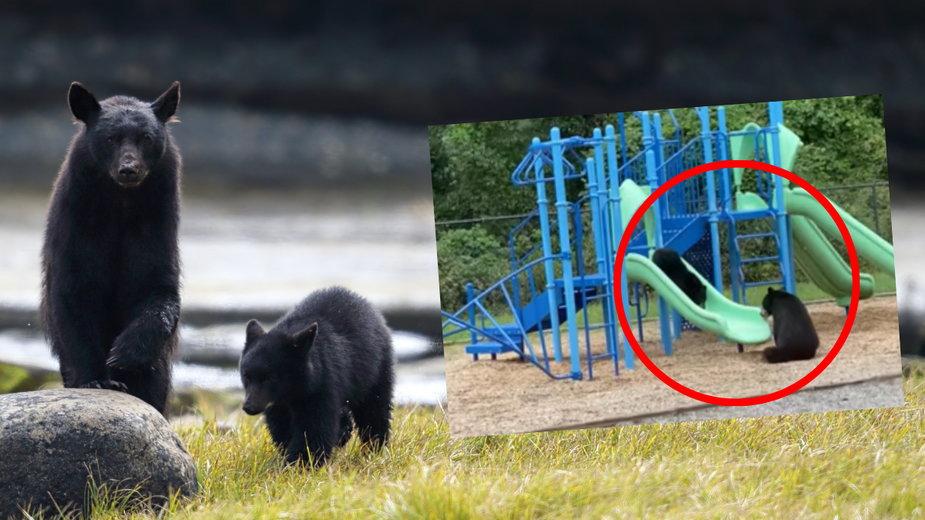 Niedźwiedzie bawiły się na placu zabaw obok szkoły w Karolinie Północnej