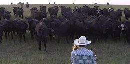 Rolnik zagrał dla swoich krów, a one...