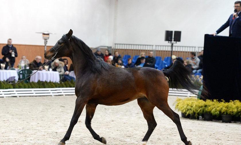 Kontrowersje wokół kolejnej aukcji koni w Michałowie