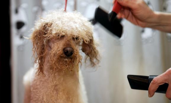 Frizer za pse sve popularnije zanimanje
