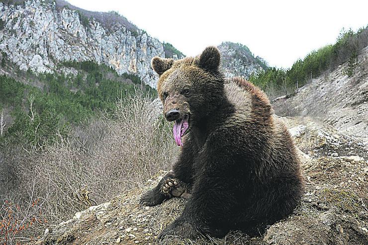 """""""Medveđa predviđanja"""" poklapaju se i sa očekivanjima meteorologa. U nižim predelima belog pokrivača neće biti do kraja ovog meseca, kažu meteorolozi"""