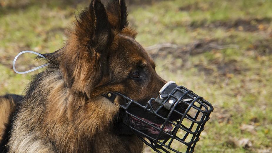 Kiedy pies musi mieć założony kaganiec? - diy13/stock.adobe.com