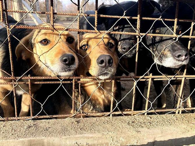 """Prihvatilište za pse i mačke """"Njuškice"""" u Subotici brine o više od stotinu pasa"""