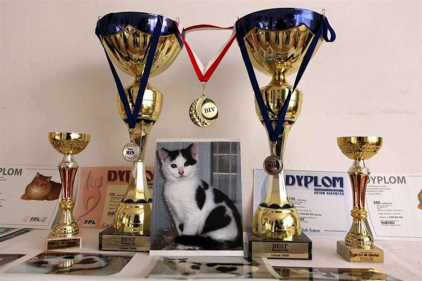 Kot Serduszko wygrywa