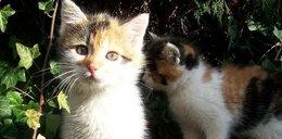 Dokarmiał bezpańskie koty, musi zapłacić prawie 100 tys. zł