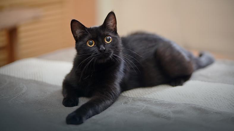 Znalezione obrazy dla zapytania kot