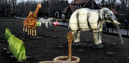 Zwierzęta rozbłysną w zoo