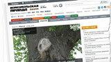 Matka Boska na drzewie w rocznice wybuchu w Czarnobylu. Cud?
