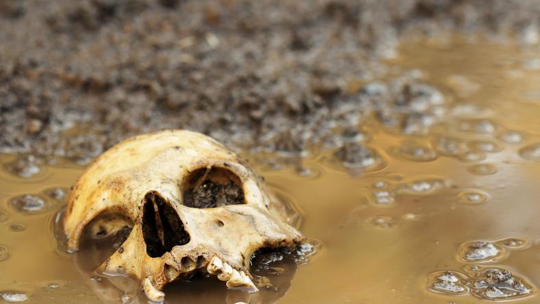 Ludzka czaszka w błocie