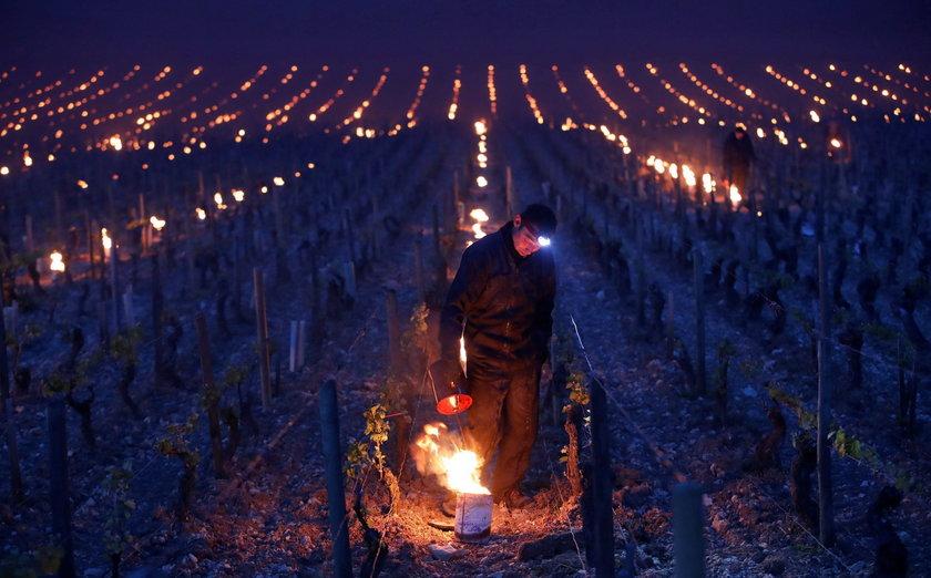 Francuskie wina mogą zdrożeć