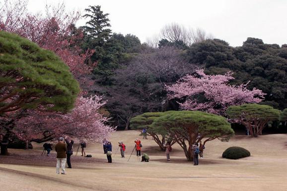 Otkako se turista izdrao na njega 2014, čuvar je počeo da pušta strance da uđu u vrt besplatno