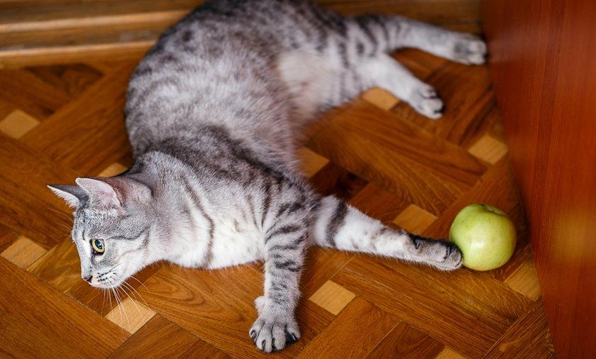 22-latek, aby dokuczyć domownikom, postanowił w okrutny sposób wyżyć się na kocie