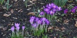 Koniec zimy! Mamy wiosnę, oto dowód!