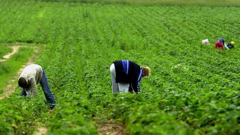 Według Credit Agricole, Ukraińcy różnicują płace w przetwórstwie