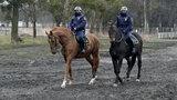 Poszukują strażników do służby konnej. Jakie są wymagania?