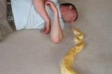 zmija 3