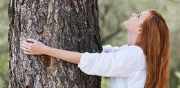 Przytul się do drzewa. A wyzdrowiejesz
