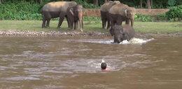 Słoń ruszył na pomoc tonącemu mężczyźnie. To nagranie wzruszy Was do łez