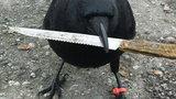 Ptak w zmowie z szaleńcem? Ukradł dowód!